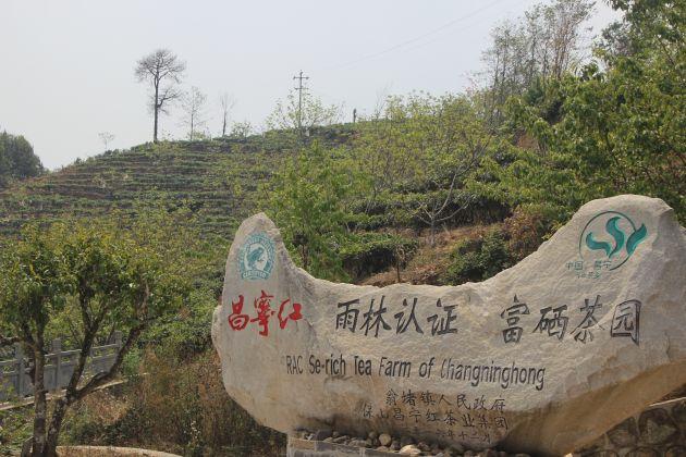 """昌宁翁堵:3.8万亩国际雨林联盟认证的""""富硒""""茶开采"""