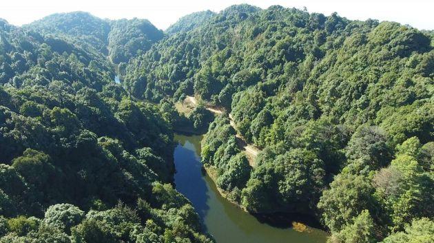 """""""天然氧吧""""效益显 善洲林场5.6万亩荒山变林海"""
