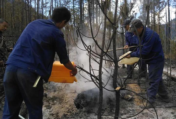 """迪庆香格里拉经济开发区""""3・29""""森林火灾火场清守行动有序进行"""