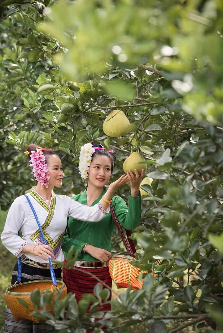 勐仑镇:培育壮大新兴产业 改造提升传统产业