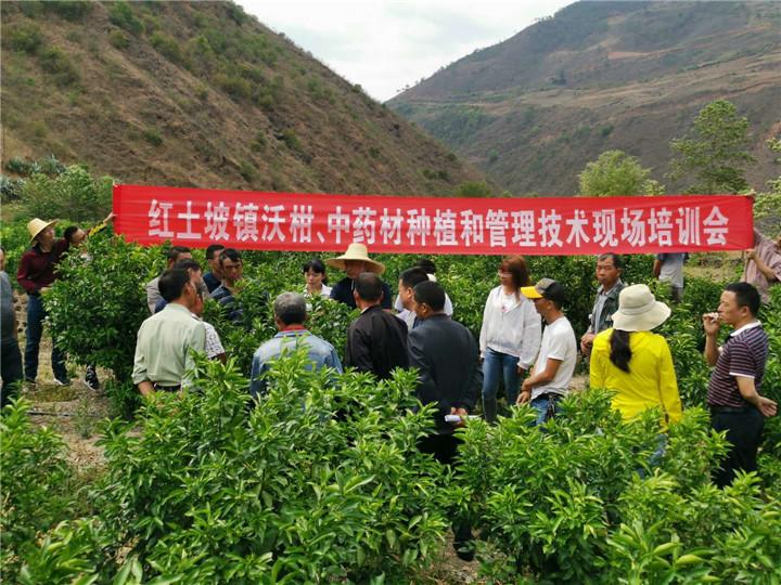 南华县红土坡镇开展沃柑及中药材种植管理技术现场培训
