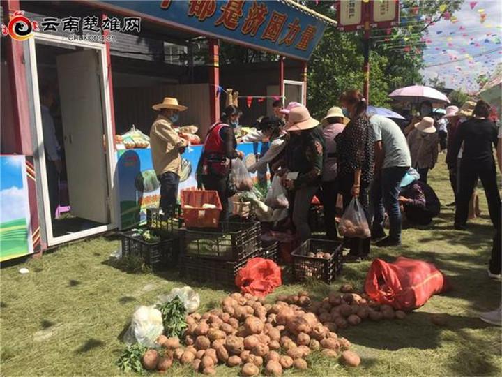 南华县沙桥镇万亩早熟洋芋喜获丰收