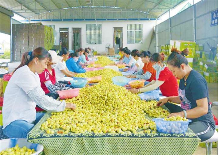 永仁特色产业引领群众脱贫致富奔小康