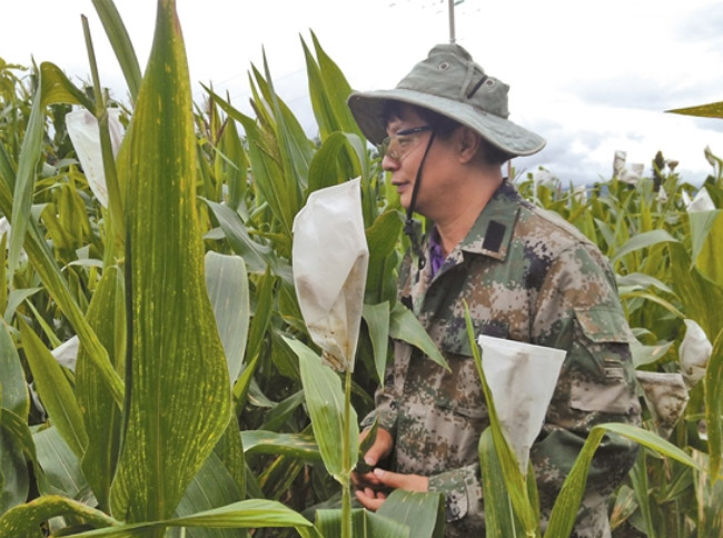 番兴明:玉米地里的追梦人