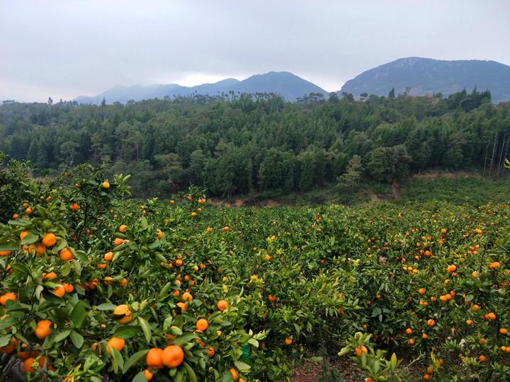 看!山腰的那抹橘黄,是希望的光